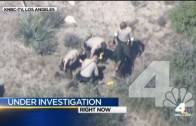 Why?! Cops pummel kid after horse escape